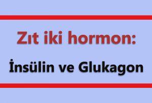 Zıt İki Hormon; Denge ve Yin Yang Etkisi