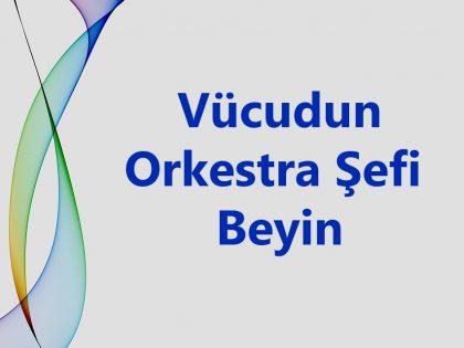 Beyin; Zihin ve Bedeni Yöneten Orkestra Şefidir