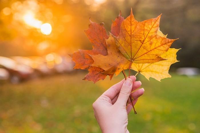 Yeni Bir Mevsim, Yeni Bir Başlangıç